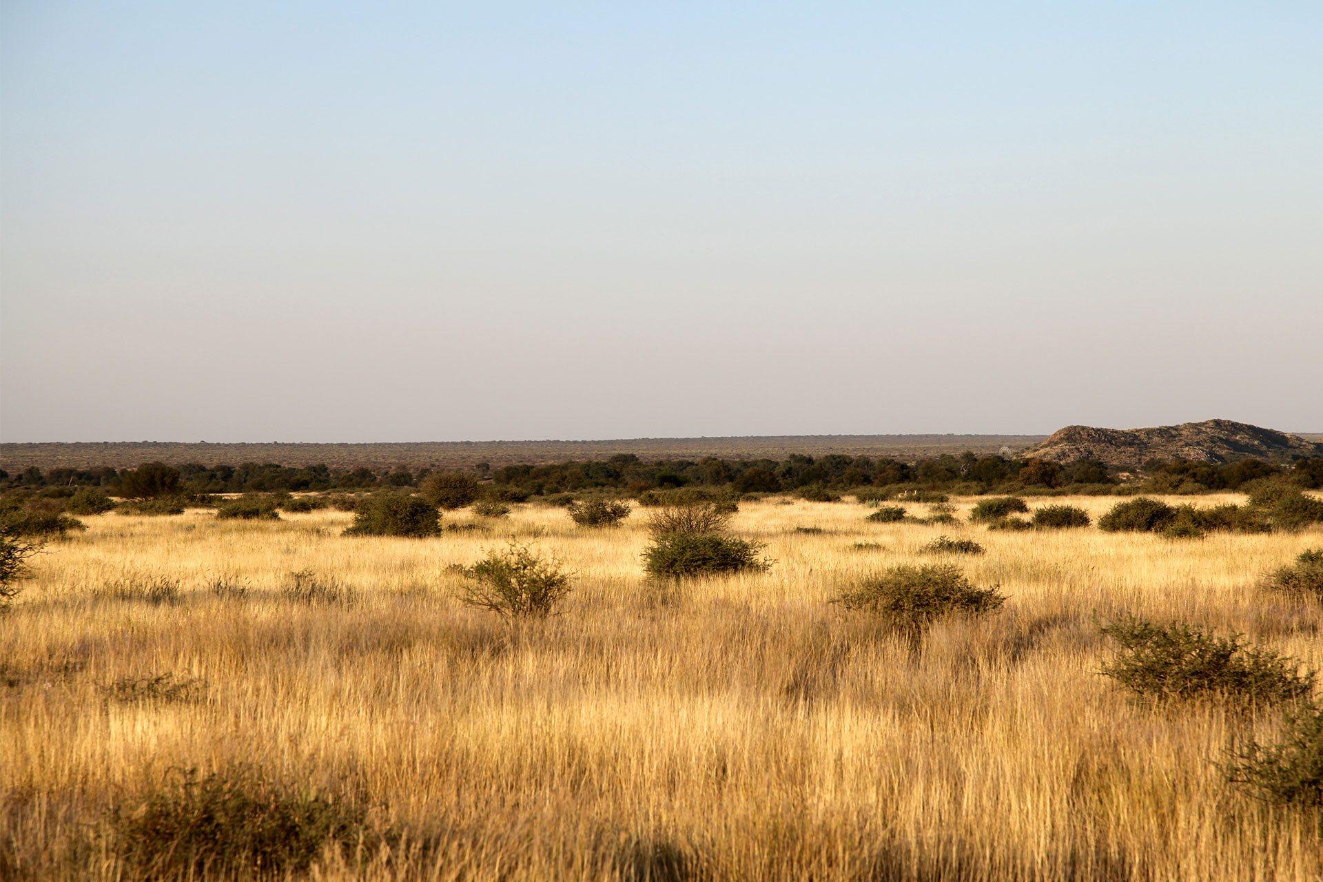 Farm in Namibia