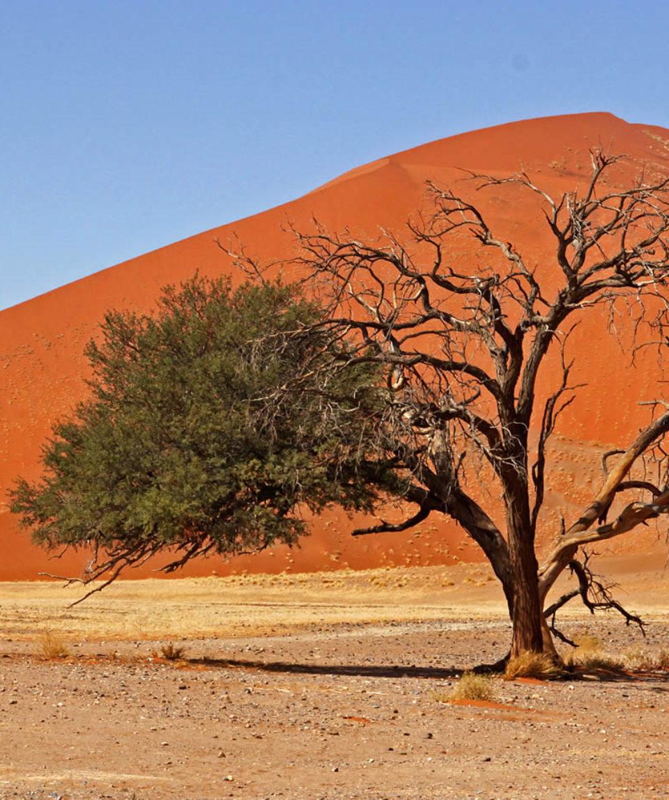 Erleben Sie Namibia