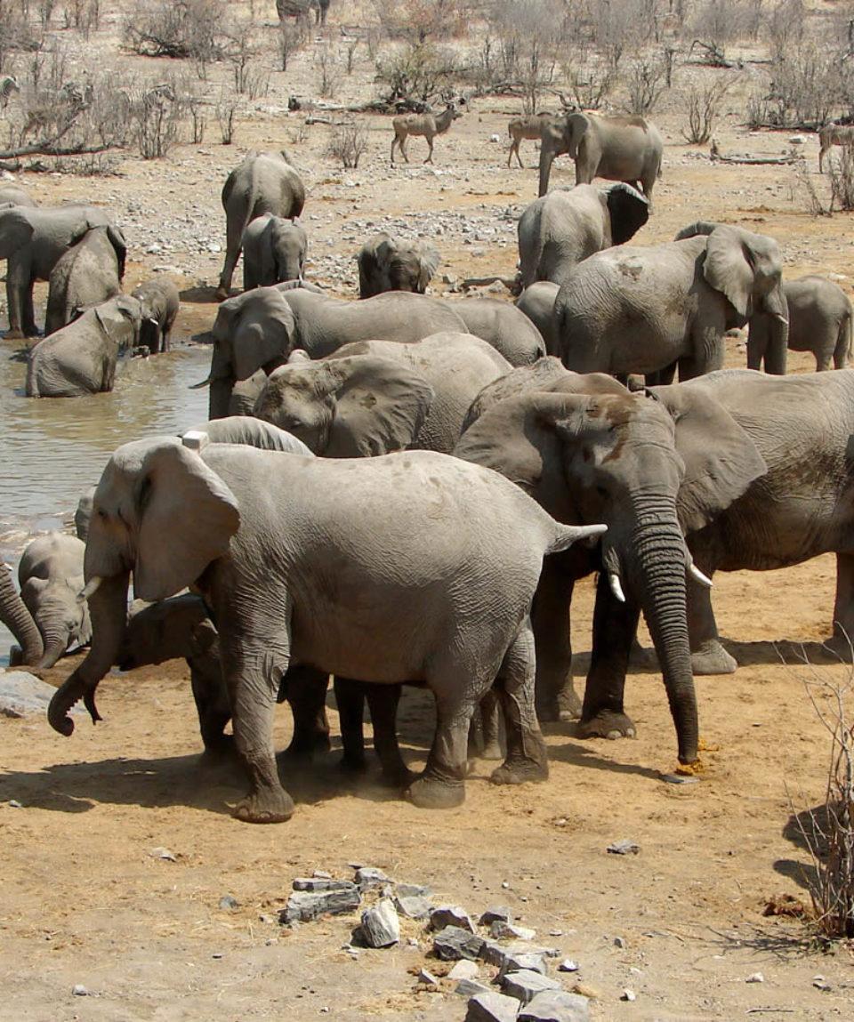 Elefantenschule bei der Wasserstelle