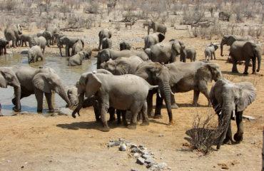 Badende Elefanten