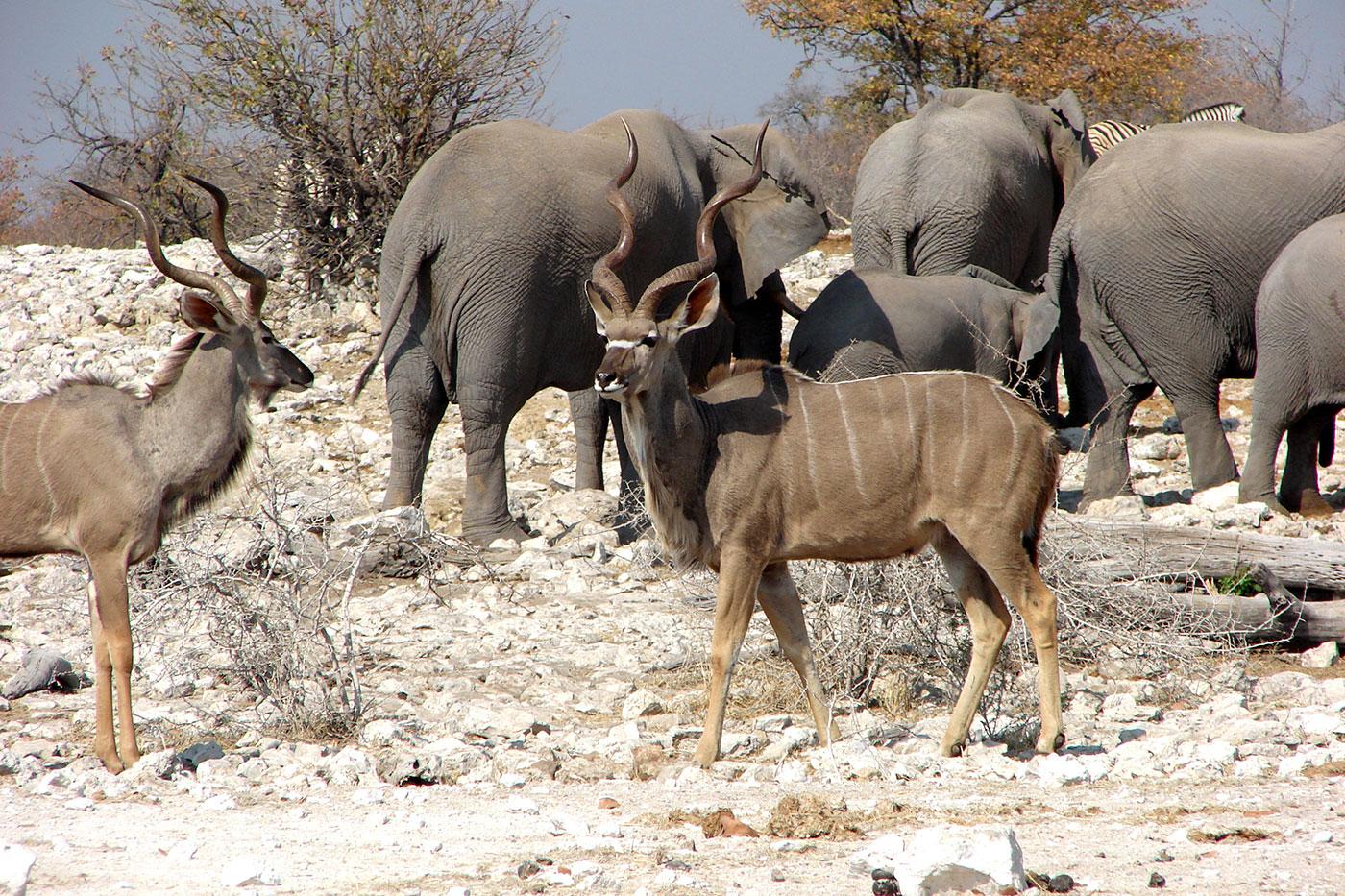 An der Wasserstelle kommen alle möglichen Tierarten zusammen.